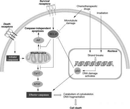 Cancer Drugs Pathways