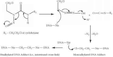 Nitrosoureas Mechanism Action