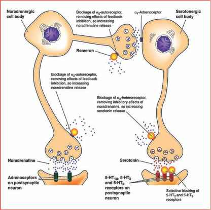 Trazodone And Receptors Image