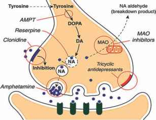 Selegiline Patch Drug Interactions