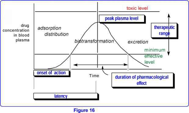 Drug Concentration Effect