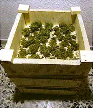 Marijuana Drying Cabinet