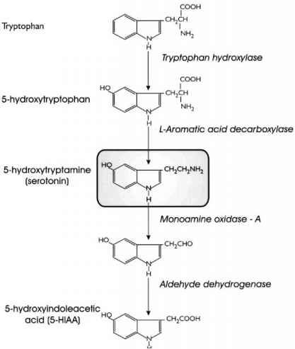 Steps Synthesis Tryptophan Images