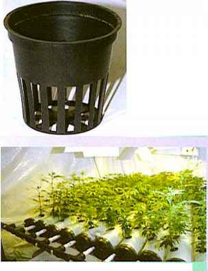 Know B4u Grow Marijuana Horticuture Drug Times