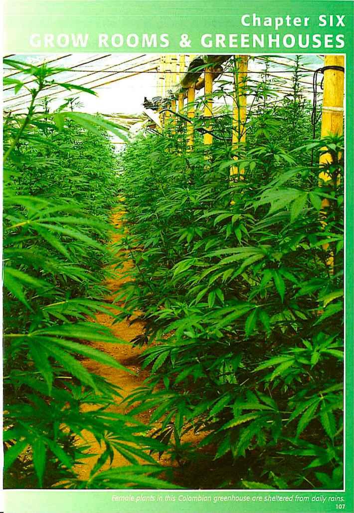 как вырастить марихуану в домашних условиях-вя2
