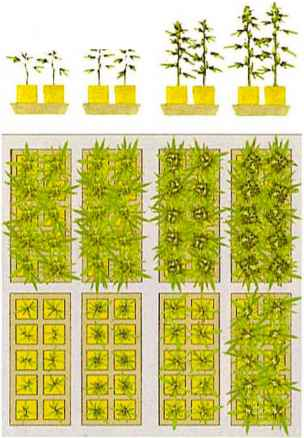 About Grow Rooms Marijuana Horticuture Drug Times