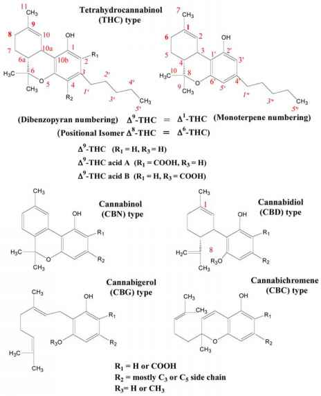 Hallucinogenic Compound Structures