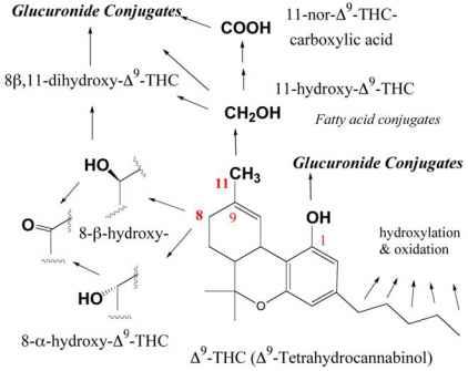 An introduction to the analysis of tetrahydrocannabinol thc